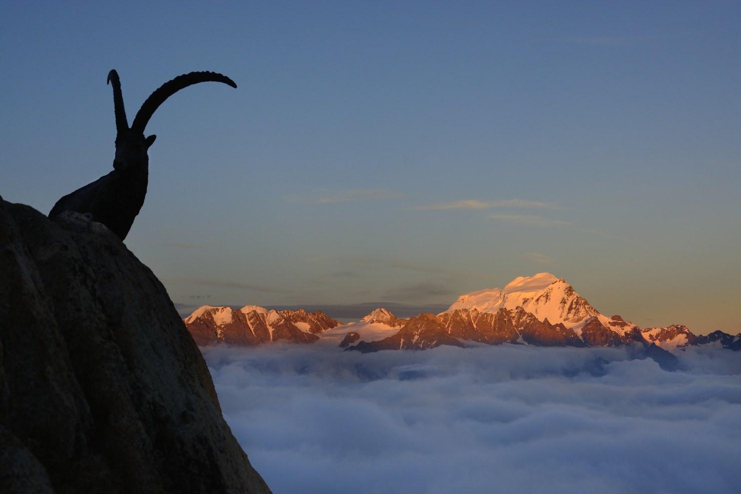 Scheinbock | Mont Blanc | 2014